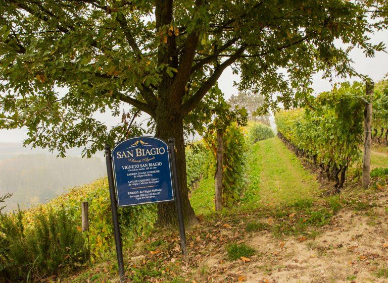 San Biagio vineryard